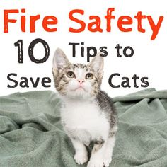 This National Pet Fire Safety Day, take stock of how you can stop cats from getting hurt in fires.