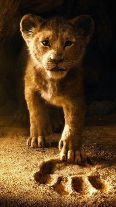 Der König der Löwen ist ein zukünftiger epischer Musikfilm des amerikanischen… The Lion King is a future epic music film of the 2019 American drama, … – The Lion King, Lion King Art, Lion King Movie, Lion King Simba, Lion Art, Disney Lion King, Lion King Remake, Lion King Poster, Lion King Quotes