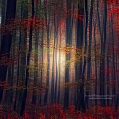fading light in the forest