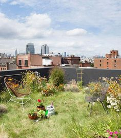 Rooftop garden, Brooklyn, New York.