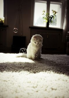 Cats and bubbles. Few things in life are better.