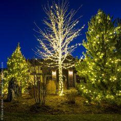 how many lights are needed to create perfectly wrapped trees this page answers this and other tree lighting questions a great resource for holiday