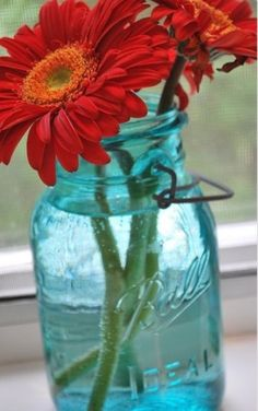 Red Daisies in a Mason Jar
