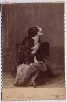 Border Collie Dog Cabinet Card E. N. Howes Ohio -- SMILING pup!! So sweet!