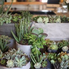 Camelback Flower Shop in Phoenix Arizona. EATSandSIGHTS.com