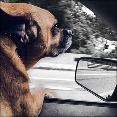 In between goals is a thing called life that has to be lived and enjoyed.         #BLONDEvibe #FKNVBN #goodvibes #fit #fitness #dog #puggle #pug #beagle #bestfriend #bff #antiaging #skincare #nowrinkles #obsessed #prince #pet #baby #dogsofinstagram #healthy #eatclean #nutrition #beautiful #thecutest #instafit #instagood #instalike #instadaily #instadog #photooftheday
