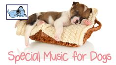Music for dogs - Special music to help dogs relax. Used by thousands! Tr...