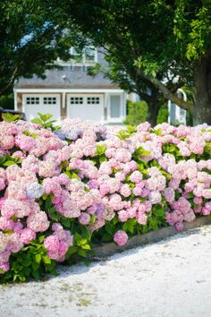 Dreamy landscape via — April showers bring May flowers! 💐 What are your go-to blooms for the perfect spring bouquet or front yard showcase? Hydrangea Garden, Pink Garden, Dream Garden, Pink Hydrangea, Design Tropical, Front Yard Landscaping, Tropical Landscaping, Flower Beds, Outdoor Gardens
