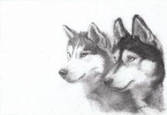 Drawing animals