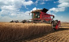 Case IH draper heads feature high center openings for unobstructed crop flow.