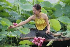 vietnam lotus garden
