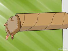 Make a Fun Hamster Tube Town Step