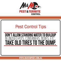 Termite Eradication Termite Control