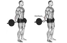 The 12 Best Bicep and Tricep Exercises for Mass – True Bodybuilding – Page 10 – Fitness&Health&Gym For Women Best Forearm Exercises, Forearm Workout, Dumbbell Workout, Gym Workout Chart, Full Body Workout Routine, Gym Workout Tips, Workout Routines, Fitness Workouts, Gym Tips