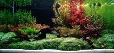 Aquascaping Ideas | Aquascapes - Giving Fish a Taste of Paradise - Aquascape Aquarium ...
