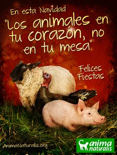 """En esta navidad """"los animales en tu corazón, no en tu mesa""""  www.AnimaNaturalis.org    ¡Felices fiestas para todos!"""