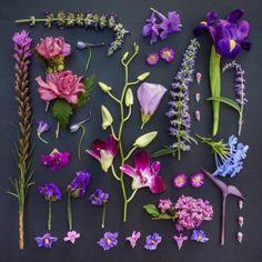 Cool same colored herbarium pages for wall decoration Unique Flower Arrangements, Unique Flowers, Purple Flowers, Beautiful Flowers, Purple Pampas Grass, Deco Originale, Deco Boheme, Blog Deco, Purple Aesthetic