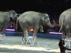 Leuk bij kern8,Kinderliedje met beeld: Circus