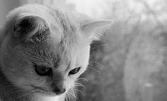 Schwarz-Weiß, Kater, Katze, Tier