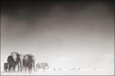 Nick Brandt Photography, ELEPHANT GHOST WORLD, AMBOSELI 2005