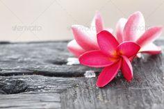 Realistic Graphic DOWNLOAD (.ai, .psd) :: http://vector-graphic.de/pinterest-itmid-1006772134i.html ... Red Frangipani Flower on old woods. ...  Balinese, aloha, asia, bali, flower, frangipani, green, hawaii, hawaiian, pacific, plumeria, south, tahiti, tahitian, thai, tropical, tropics, white, wood, woods, yellow  ... Realistic Photo Graphic Print Obejct Business Web Elements Illustration Design Templates ... DOWNLOAD :: http://vector-graphic.de/pinterest-itmid-1006772134i.html