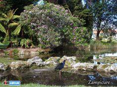 #fotoricordo Zampicure-Roturua, New Zealand