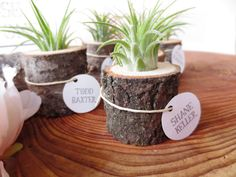 Tiny Air Plant Living in A Tree Stump by thisfinedayhome on Etsy