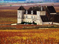 Chateau Surrounded by Vines, Burgundy, France