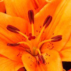 Orange Lilies & Roses - Bouquet of flowers in beautiful autmumn colours