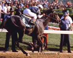1981 Kentucky Derby Winning Race Horse Pleasant Colony