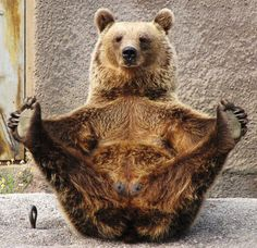 Bear-y good form!