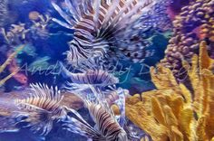 Lion Fish Digitally Enhanced Photograph by AndrassidyDesigns
