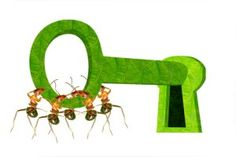 Safe Ant Control   Stretcher.com - Safely kill ants without putting kids and pets at risk