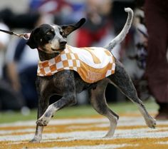 Smoky the University of Tennessee mascot. Go Vols!!!!