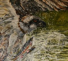"""Painting by Don Dean, """"The Cycle,"""" osprey catching rainbow trout."""