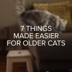 7 Things Made Easier For Older Cats