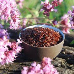schwarze Flohsamen aus Frankreich #Aspermühle Kraut, Plants, Food, Low Fiber Foods, France, Essen, Meals, Plant, Yemek