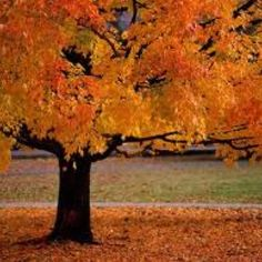 69 best fall screen saver images on pinterest autumn leaves