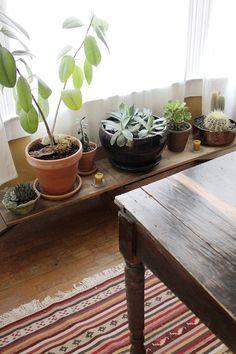 para las plantas