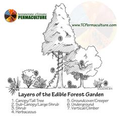Layers of the Edible Forest Garden or Food Forest