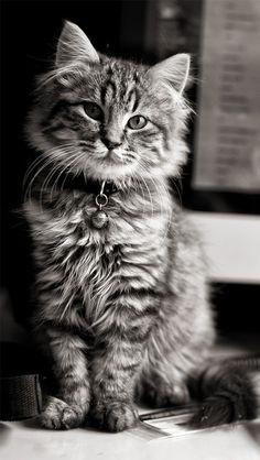 Cat Wallpaper Tumblr Iphone 51156 Movieweb