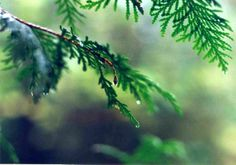 Rain - A single drop of rain elicits thoughts of the primordial forest