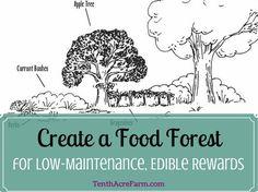 Create a Food Forest for Low-Maintenance, Edible Rewards – Tenth Acre Farm