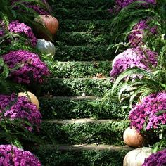 The best part of this image: using the vertical space of the steps as a planting space