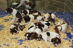 103 dogs seized from Thibodaux breeder found guilty of animal cruelty