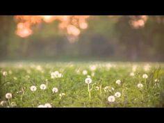 ▶ Zen Garden - Yoga Relaxation & Meditation MUSIC 10 HOURS [ Sleep Music ] - YouTube