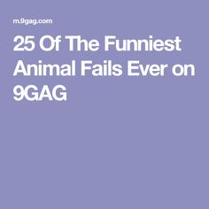 25 Of The Funniest Animal Fails Ever on 9GAG