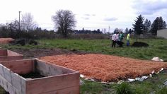 Newberg HS youth helped move mulch and shavings, as well as positioning the raised beds.