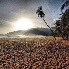 Morning glory, Choroni. Venezuela