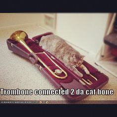 Trombone LOLcat~ this makes me miss band Music Jokes, Music Humor, Love Band, Cool Bands, Trombone Jokes, Marching Band Jokes, Band Nerd, Band Puns, Band Rooms